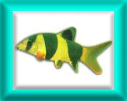 peixe38