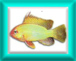 peixe39