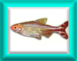 peixe40