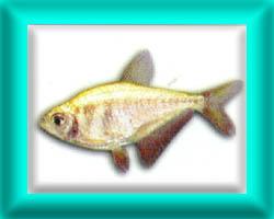 peixe42