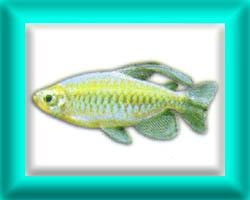 peixe44
