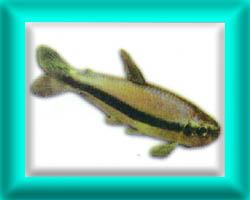 peixe45