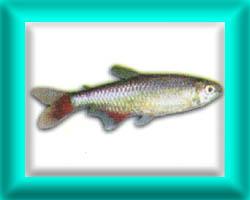 peixe47