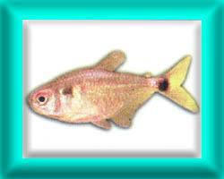 peixe48