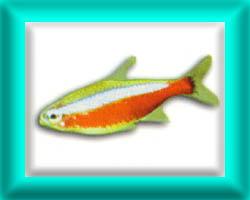 peixe53