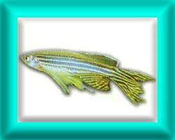 peixe54