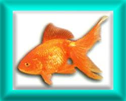 peixe57