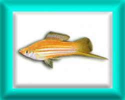 peixe59
