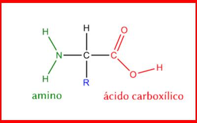 destaque_aminoacido