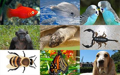 destaque_animais