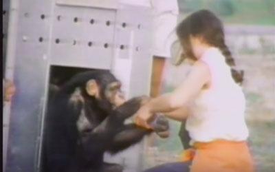 destaque_artigo_chimpanze2