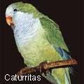 caturritas