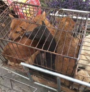 Os animais foram encontrados em péssimas situações. (Foto: Reprodução / Humane Society International)