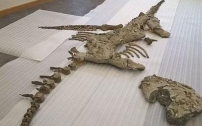 Fóssil de plesiossauro foi descoberto em 2004 em pedreira na Inglaterra (Foto: BBC)