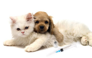 destaque_vacina_cao_gato
