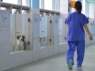 Pesquisador sul-coreano anda entre os cães clonados passado em uma sala de atendimento da Fundação (Foto: JUNG YEON-JE / AFP)