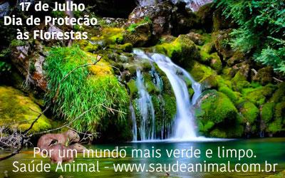 destaque_floresta
