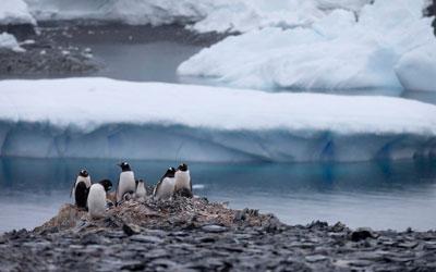 destaque_noticia_antartica