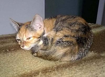 gato_dormindo2