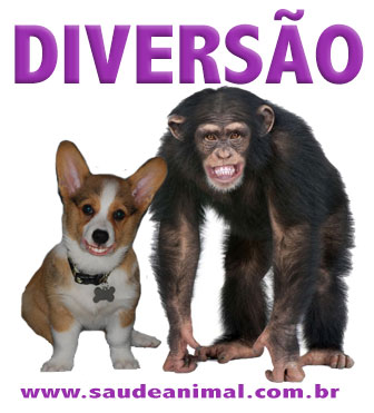 logo_diversao