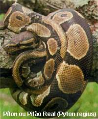 serpentes01