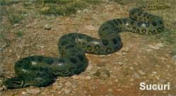 serpentes04