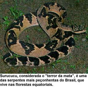 serpentes05