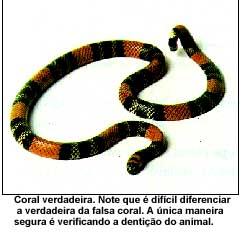 serpentes06