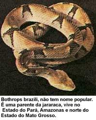 serpentes08