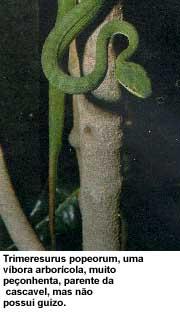 serpentes10