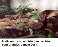 serpentes11
