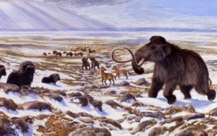 Ilustração mostra como seria ambiente na Era do Gelo com mamute, cavalo selvagem, bisão e boi almiscarado (Foto: George Teichmann)
