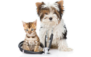 destaque_cat_dog_sick
