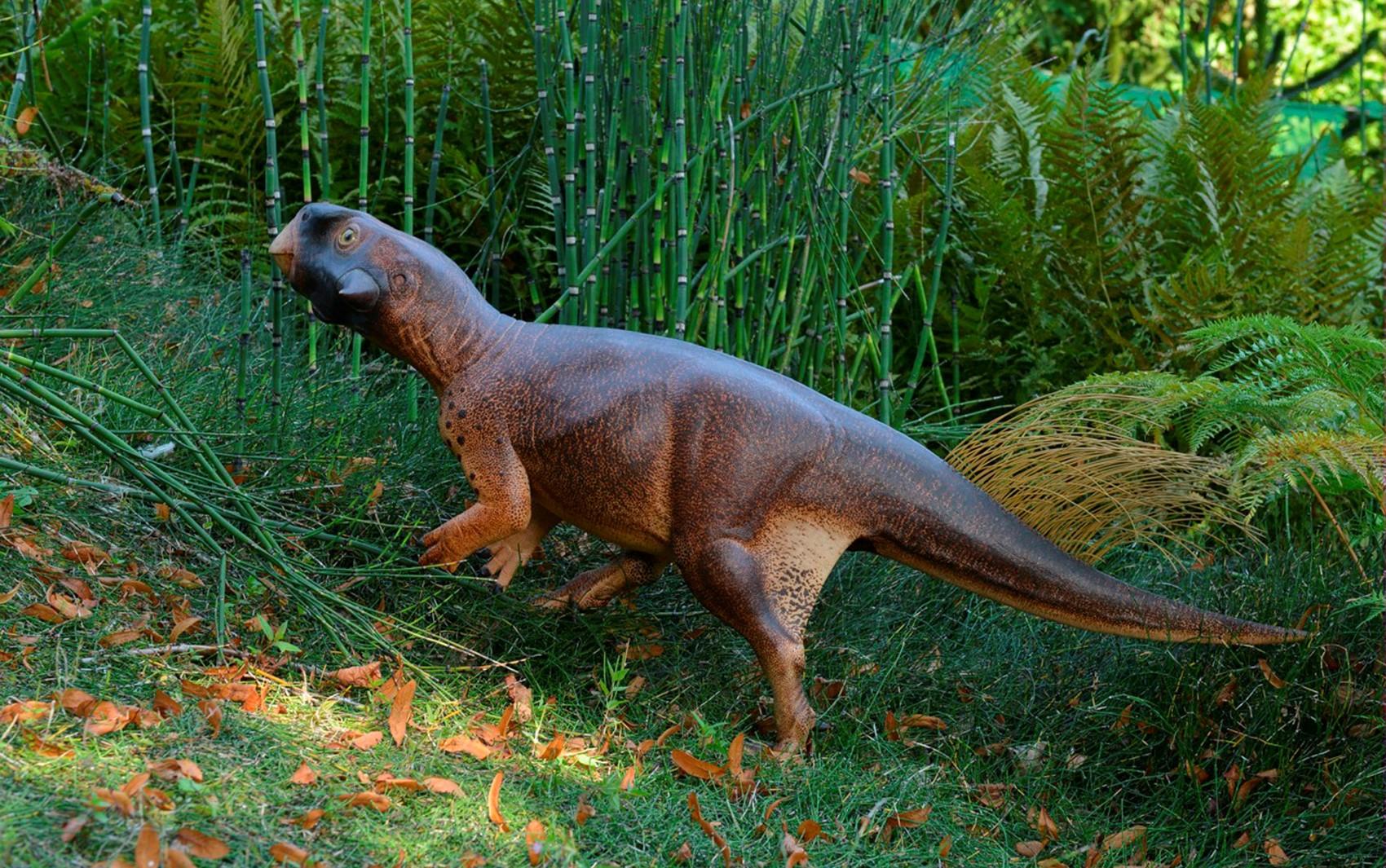 Ilustração do psitacosauro feita por artista mostra como dinossauro deveria ser, de acordo com estudos (Foto: Jakob Vinther/University of Bristol and Bob Nicholls/Handout via REUTERS)