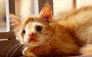 destaque_gato_defeito