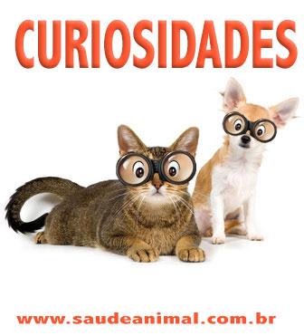 logo_curiosidade