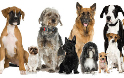 destaque_many_dogs