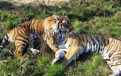 Wildcat Sanctuary