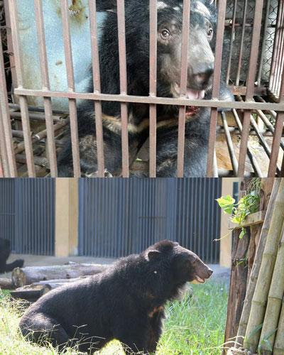 urso_salvo