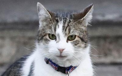 Larry, o gato da Rua Downing, usa uma coleira com desenhos da bandeira do Reino Unido e um aviso de que ele possui chip localizador em frente à residência oficial da primeira-ministra britânica em Londres (Foto: Stefan Wermuth/Reuters)