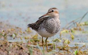 Pesquisadores acompanharam 120 aves com um pequeno aparelho acomplado a seus corpos (Foto: Andreas Trepte www.photo-natur.net / Wikimedia Commons)