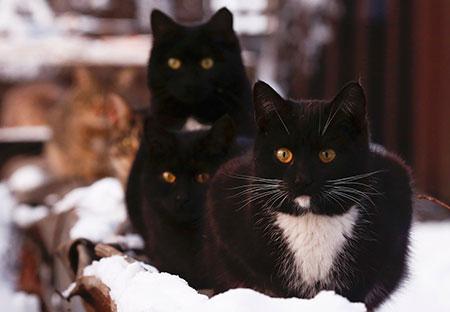 Gatos se reúnem perto de aquecedor em Moscou, na Rússia, em foto de 9 de janeiro; gatos mostraram ser tão bons quanto cães em vários testes mentais (Foto: Reuters/Maxim Shemetov)