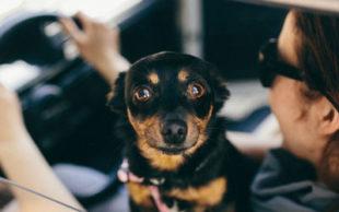 Estudo mostra que os cachorros conseguem reconhecer emoções humanas (Foto: Kaboompics)