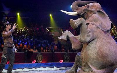 destaque_circo