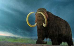 Reconstrução de um exemplar de mamute-lanoso que está no Museu Real da Columbia Britânica (Foto: rpongsaj/Wikimedia Commons)