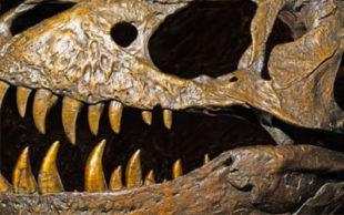 Os dinossauros mais salvagens e carnívoros, como o tiranossauro, foram reclassificados (Foto: Millard H. Sharp)