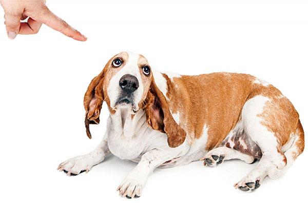 dog_culpa