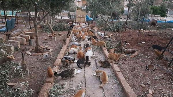 Foto: Il Gattaro D'Aleppo