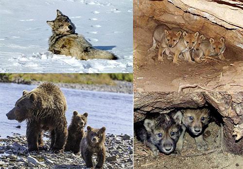 animais_ameacados_usa