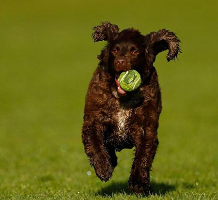 Falta de exercício físico é um dos fatores relacionados com o aumento de casos de diabetes em cachorros (Foto: REUTERS/Jason Cairnduff)